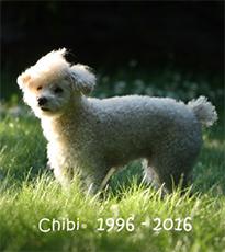 chibi 1996 - 2016